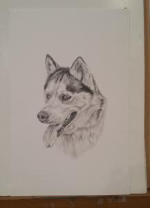 On The Drawing Board - Husky
